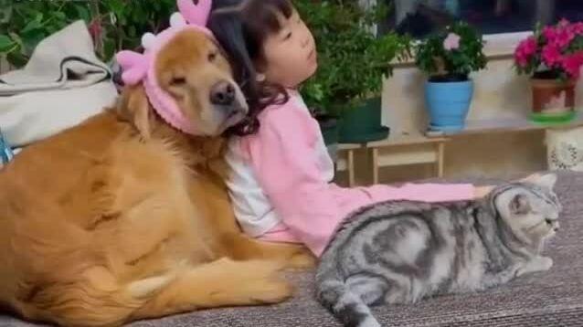 Bé gái chơi ngoan cùng thú cưng