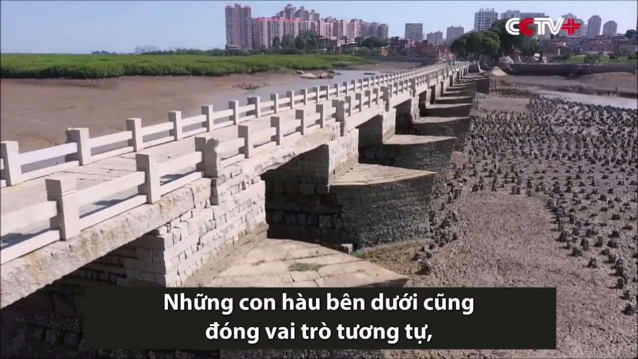 Bí quyết giúp cây cầu Trung Quốc đứng vững 1.000 năm