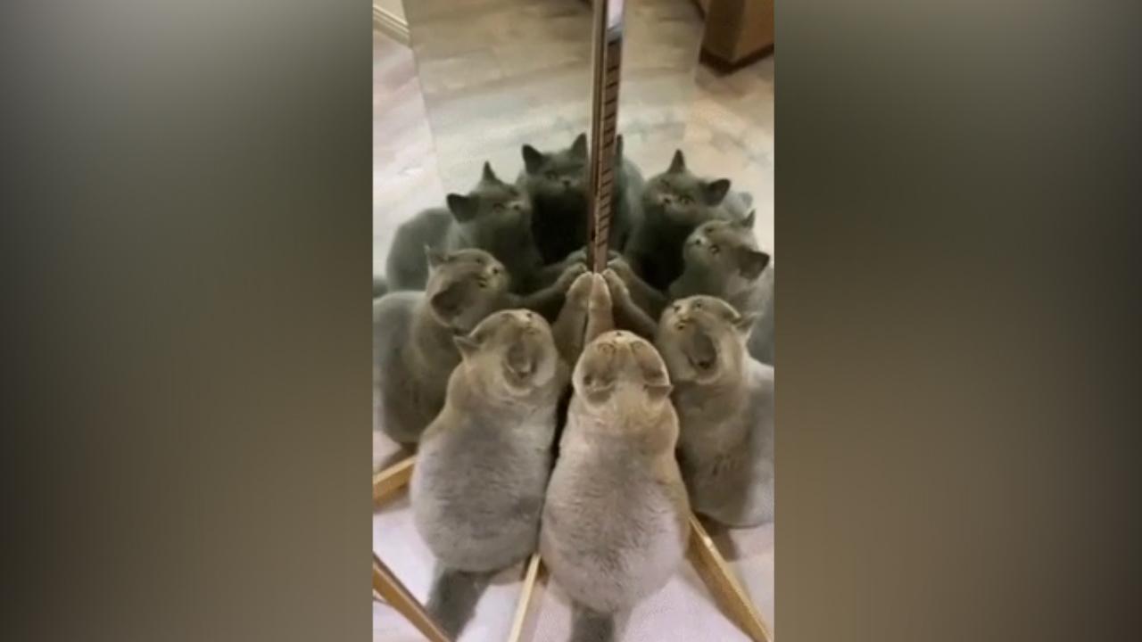 Có bao nhiêu con mèo?