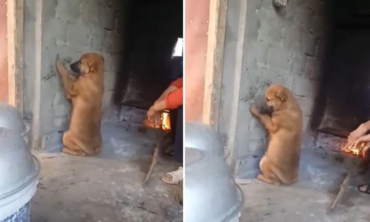 Chó cưng bị cô chủ chọc quê khi bị phạt