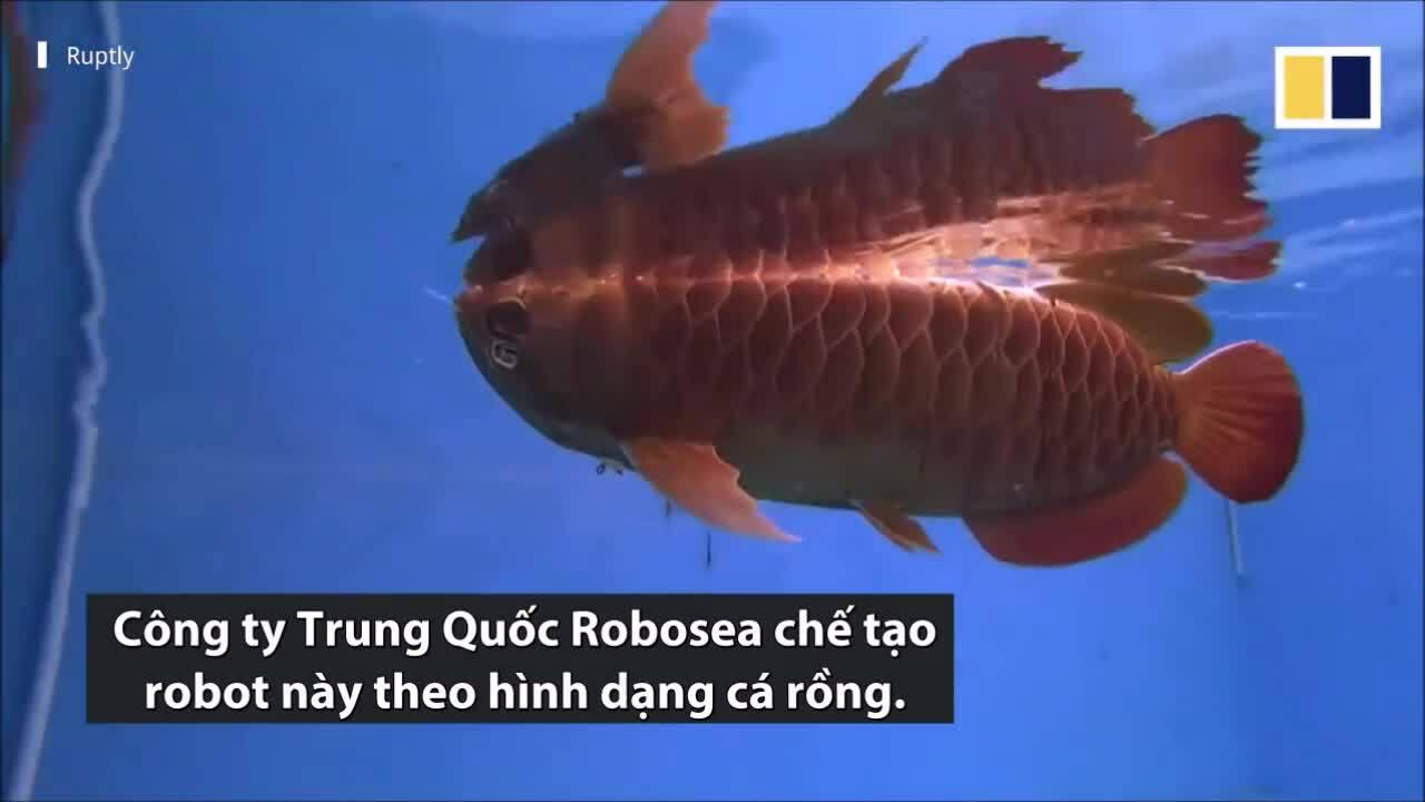 Công ty Trung Quốc chế tạo robot thay thế cá rồng thật