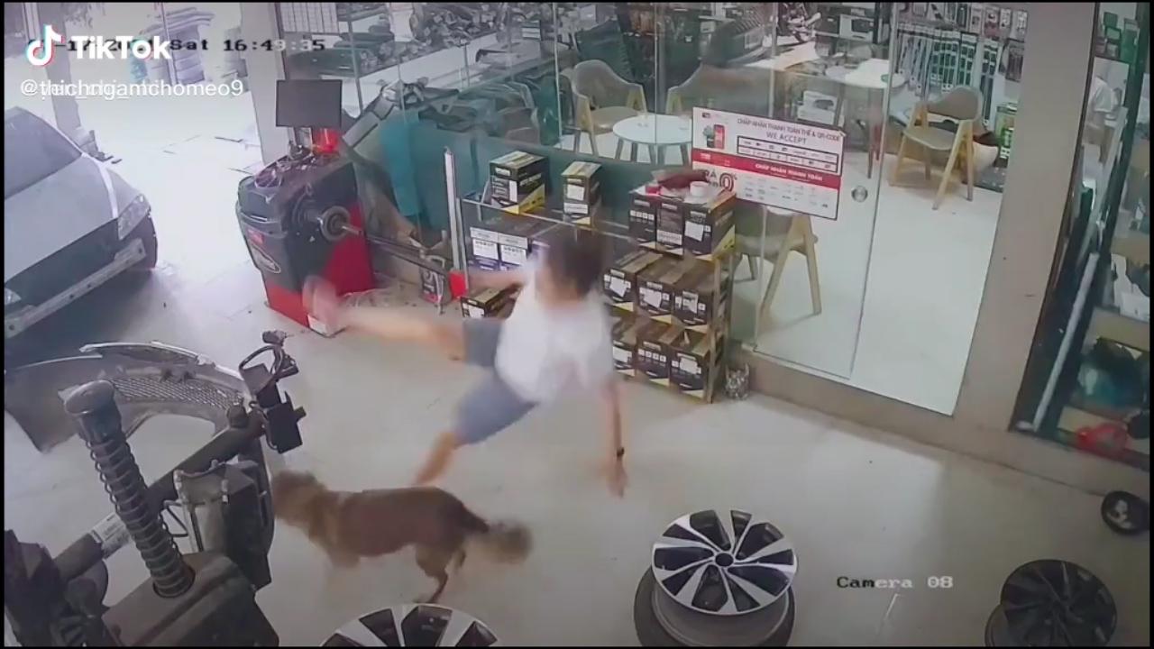 Cô chủ ngã sóng soài vì tung cước cún cưng