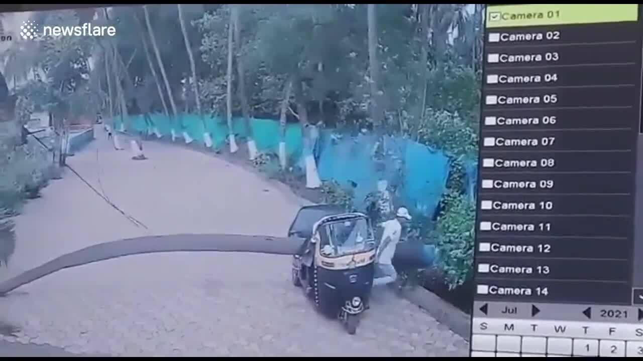 Tài xế kịp thoát khi xe ba bánh bị cây đè bẹp
