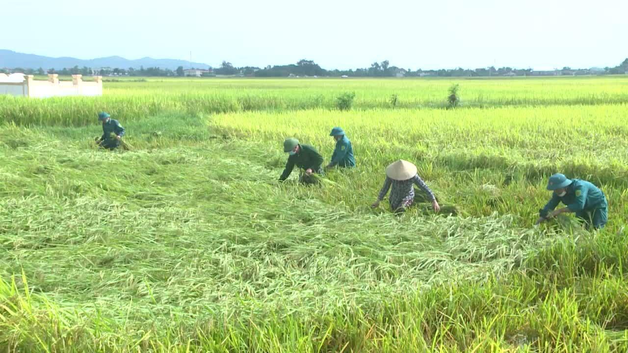 Bộ đội, công an gặt lúa chạy bão giúp dân
