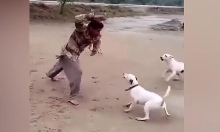'Cao thủ' múa quyền khiến chó dữ khiếp vía