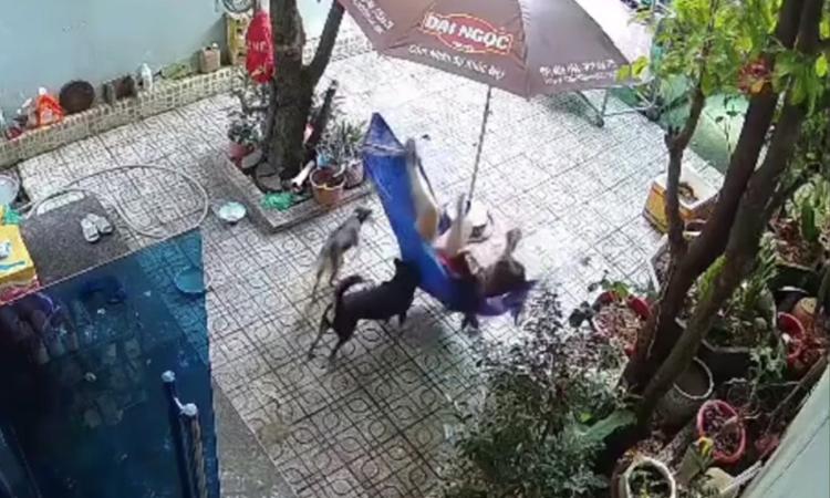 Chó cưng hú hồn khi cô chủ nằm đứt võng