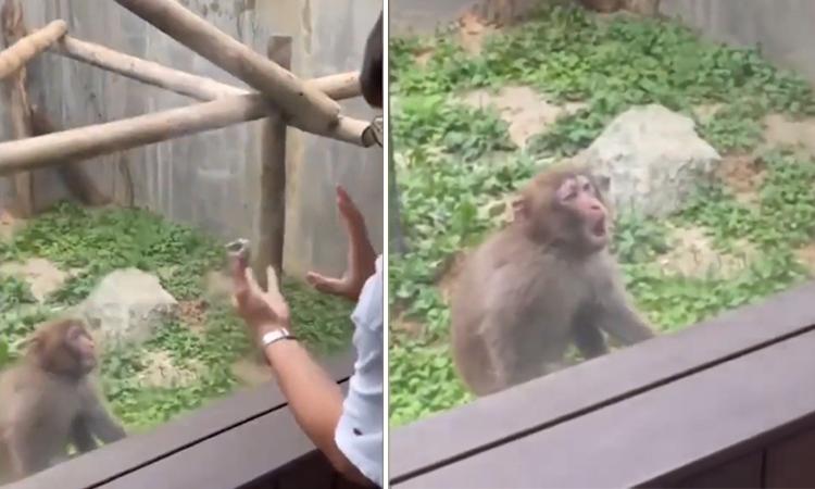 Khỉ trầm trồ khi xem chàng trai ảo thuật