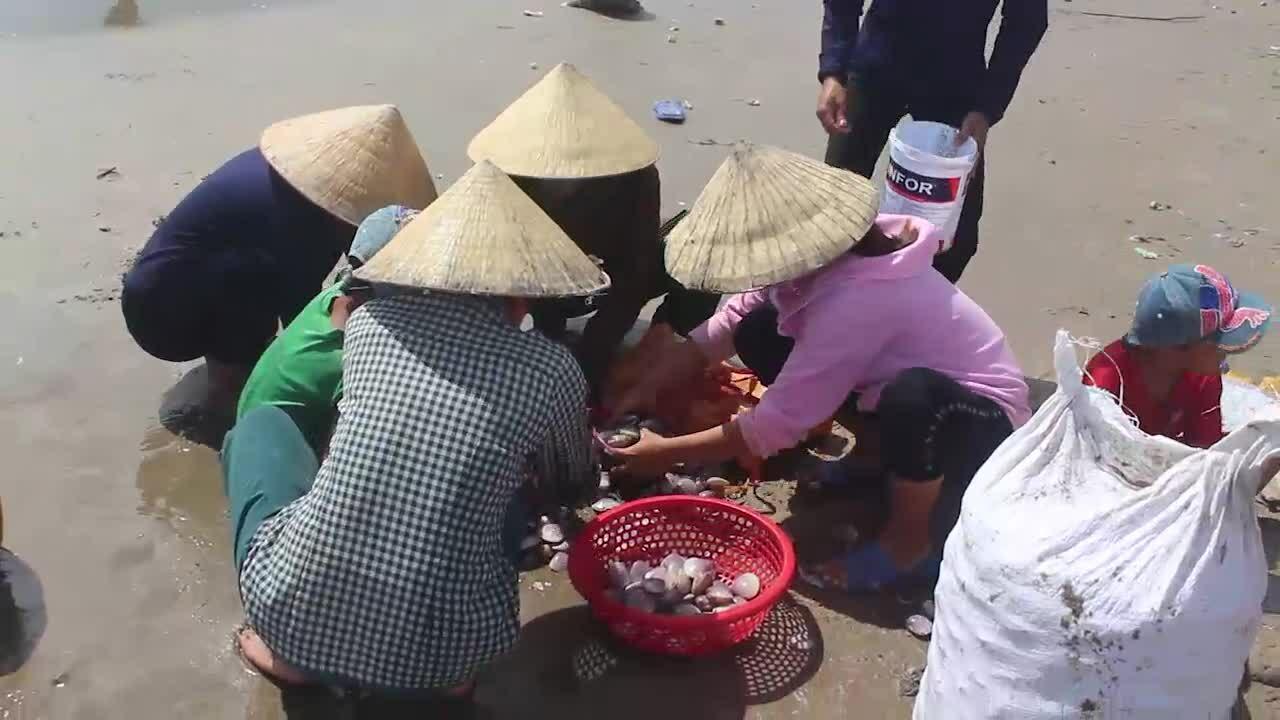 Hàng trăm người ra bãi biển nhặt 'lộc trời'
