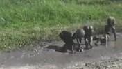 Ba cậu nhóc bỏ chạy khi mẹ bắt gặp tắm bùn