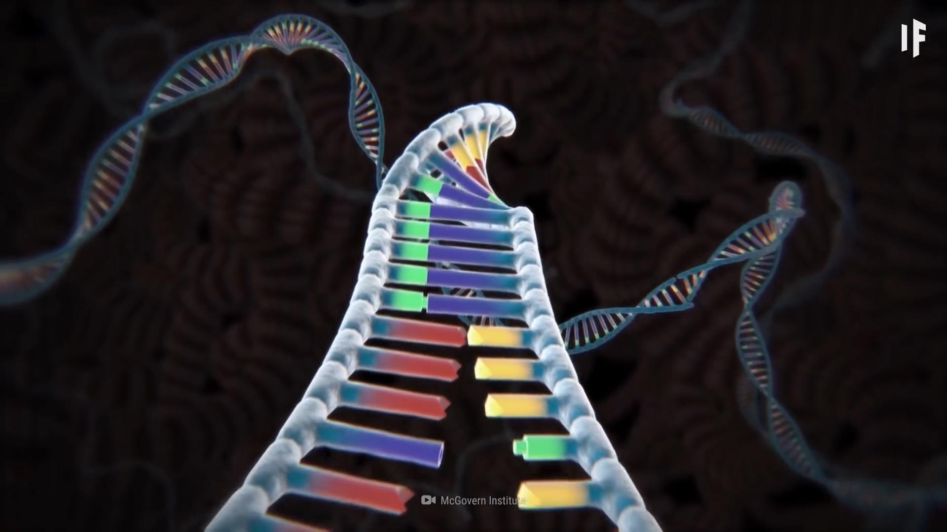 Điều gì xảy ra nếu ADN của chúng ta ngừng đột biến?
